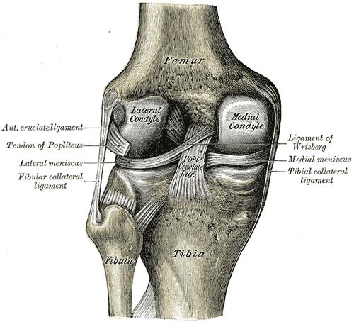 ménisque du genou