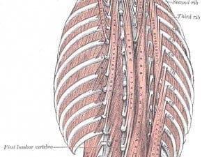 Spasmes fréquents aux muscles de la colonne vertébrale