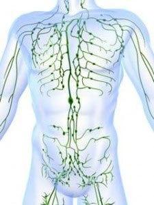 Système-Lymphatique2