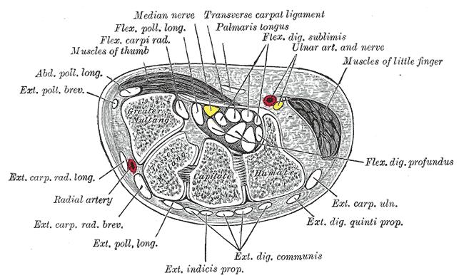 Image du tunel carpien